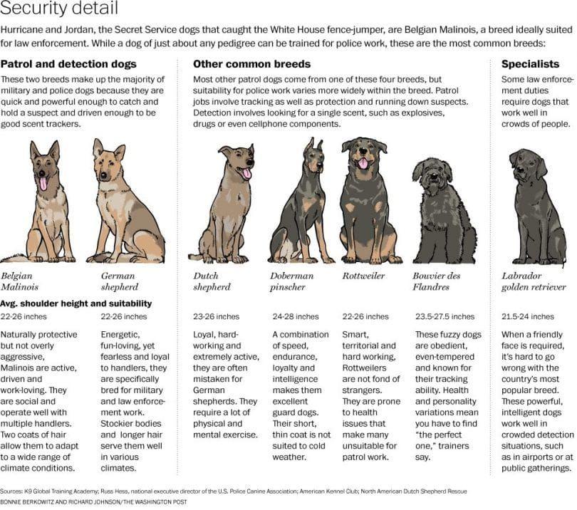 perros militares infografía