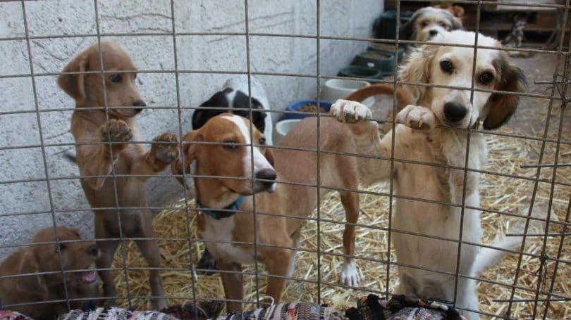 Refugio para perros