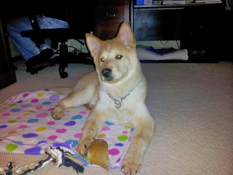 perro jugando Chusky