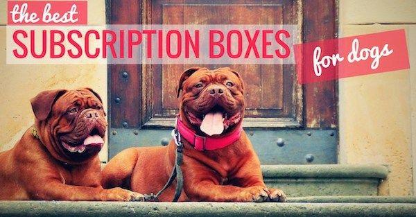 Cajas de suscripciГіn mensual para perros: los 14 mejores opciones!