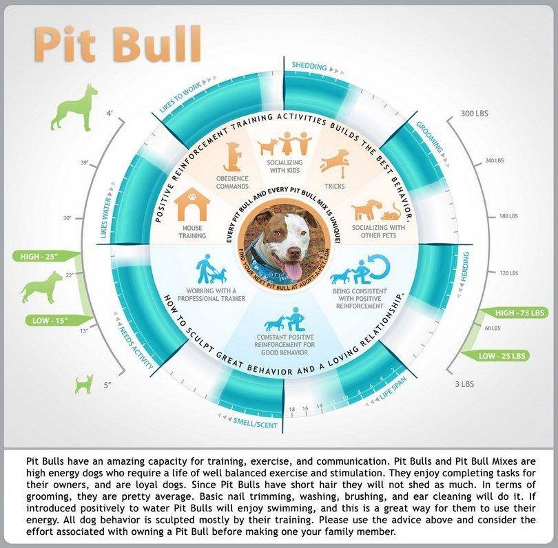Pit Bull infografía