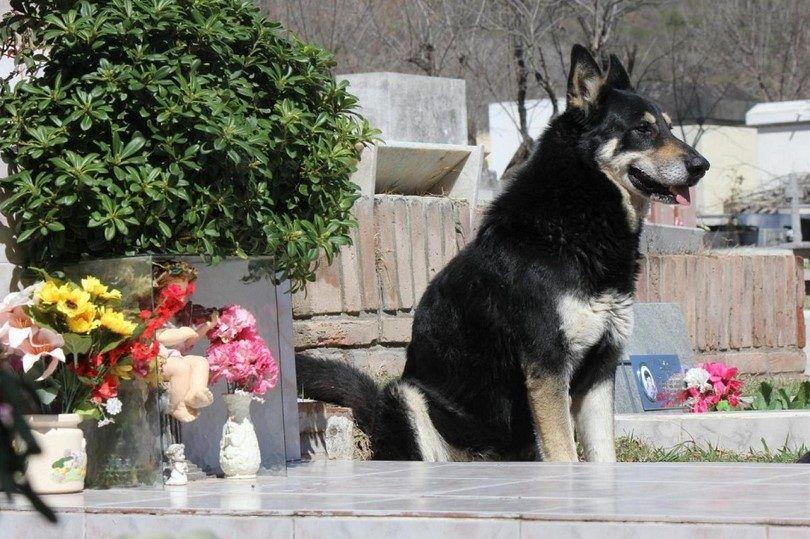 La mayoría de las razas de perros leales: 10 razas increíbles para contar