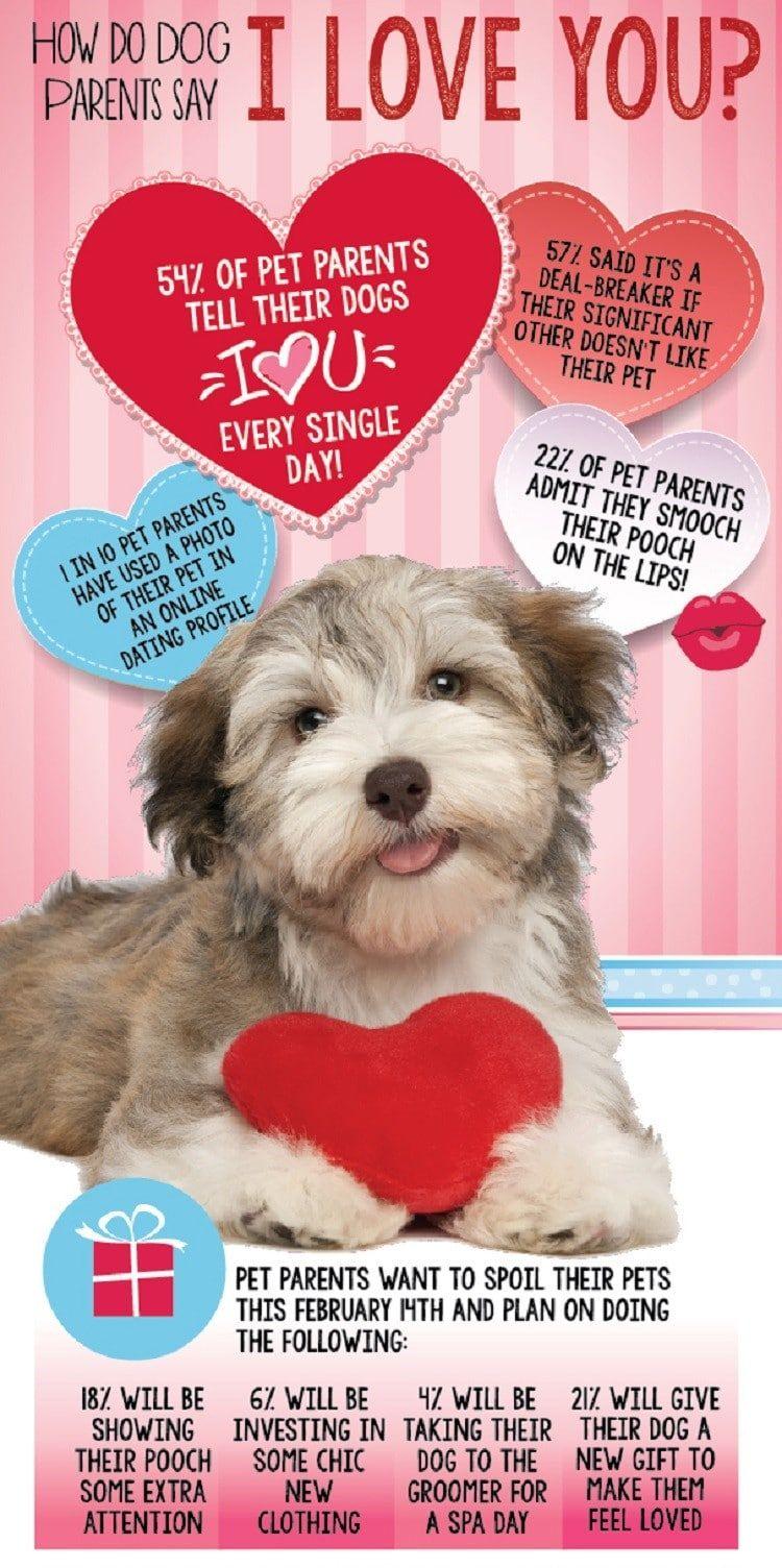 amor del perro