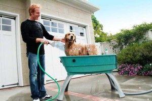 Debe tener fuentes del perro cada dueño del perro Debe Tener