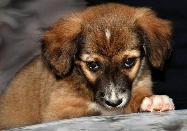 Mi perro tiene gas malo: puede ser detenido?