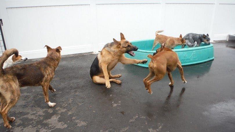 Perro necesita socialización