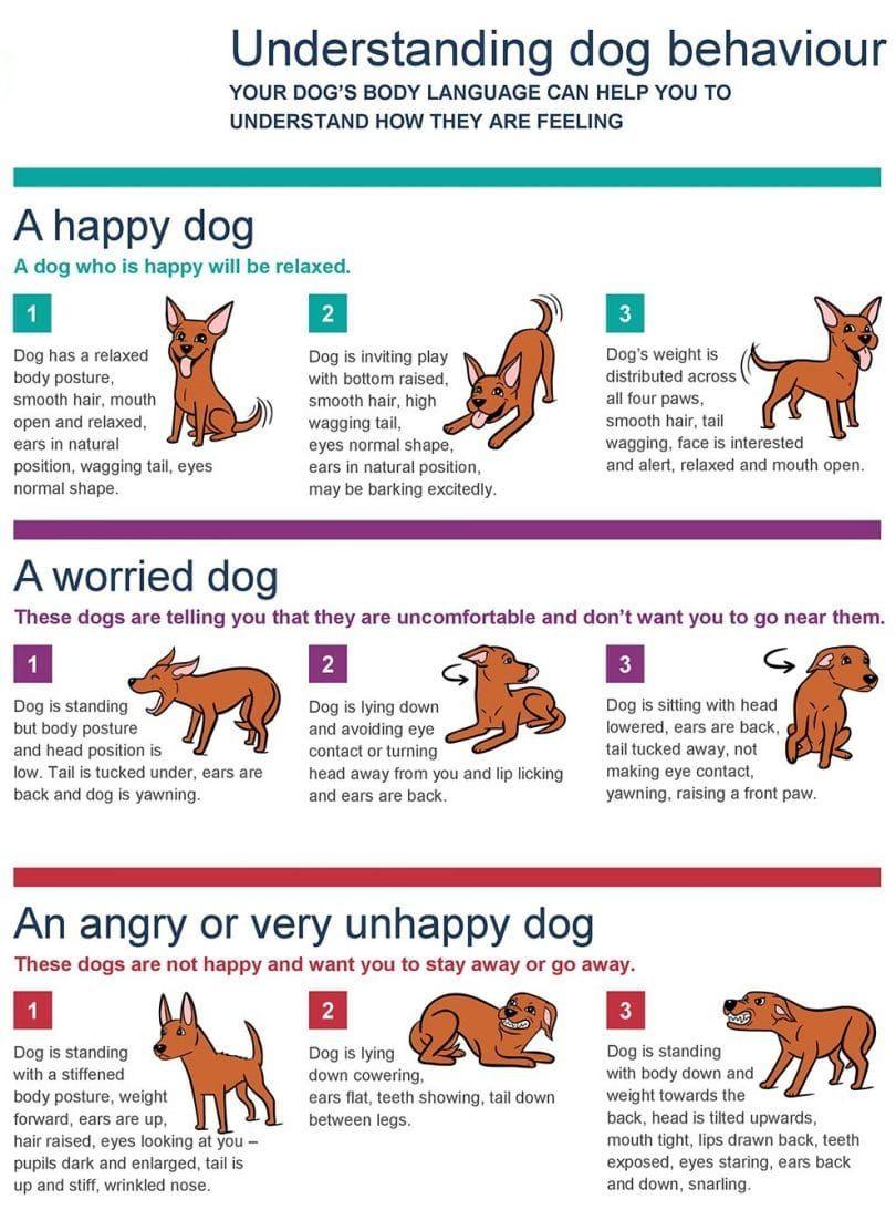 la comprensión del comportamiento del perro