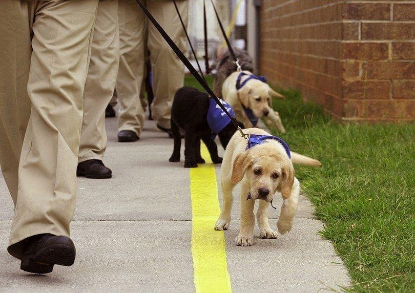 entrenamiento del perrito con los demás
