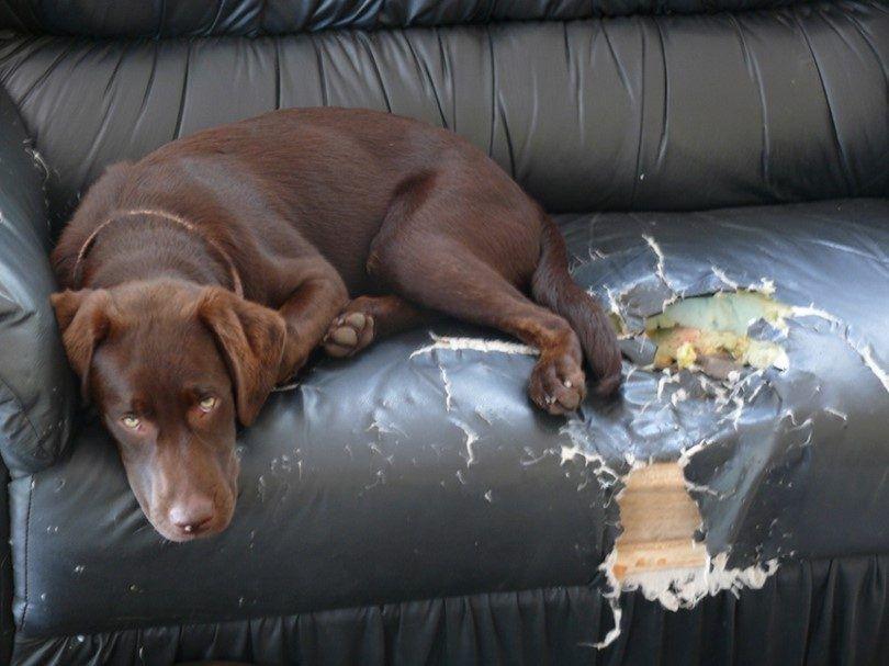 perro agujereado