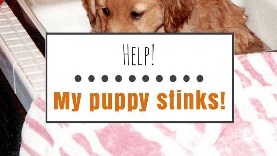 Mi perrito apesta! ¿Qué debo hacer?