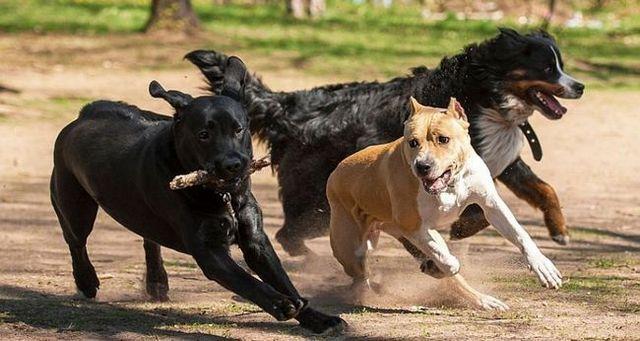 La ley natural de perro 1: perros son instintiva
