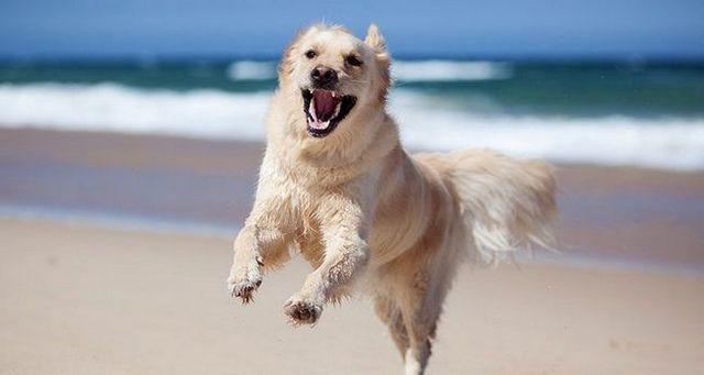 La ley natural de perro 2: a los perros, la energГa es todo lo