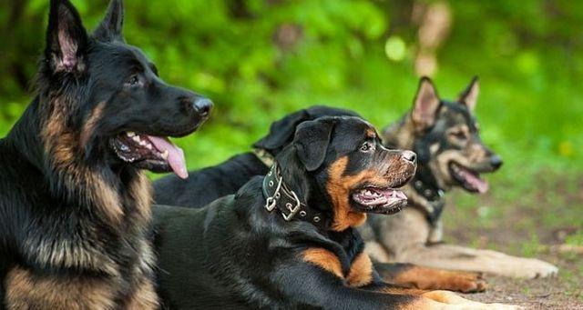 La ley natural de perro 3: los perros son animales, especie, la raza y el nombre