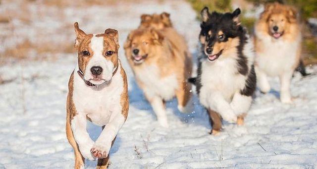 La ley natural de perro 5: los perros son animales sociales.