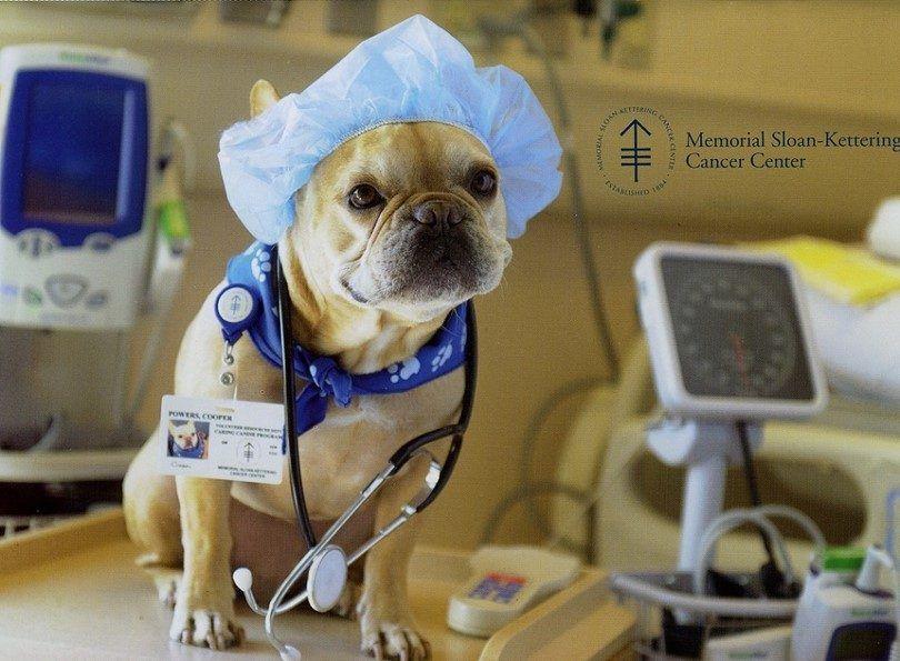 La castración de un perro: evitar el peligro de la superpoblación