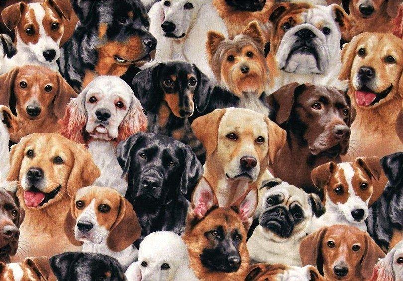 panes para perros