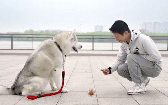 Nuevo Plan Impulso del perro en color App es extraño e interesante
