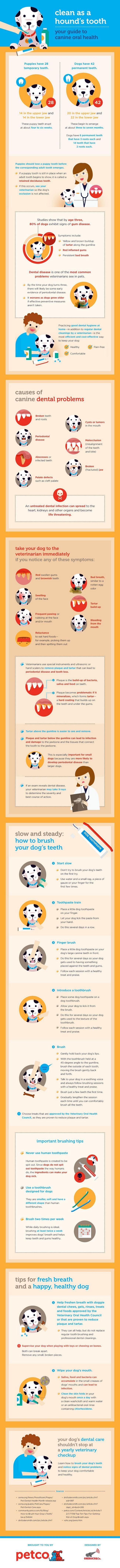 Nueva infografía en la salud bucal canina de petco!