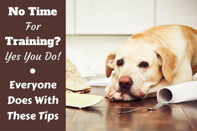 No hay tiempo para el entrenamiento del perro? Siga estos consejos y técnicas
