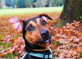 Ahora escucha esto: ¿cuál es el mejor limpiador del oído del perro por ahí?