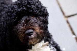 Obama: un segundo término no incluye un segundo perro