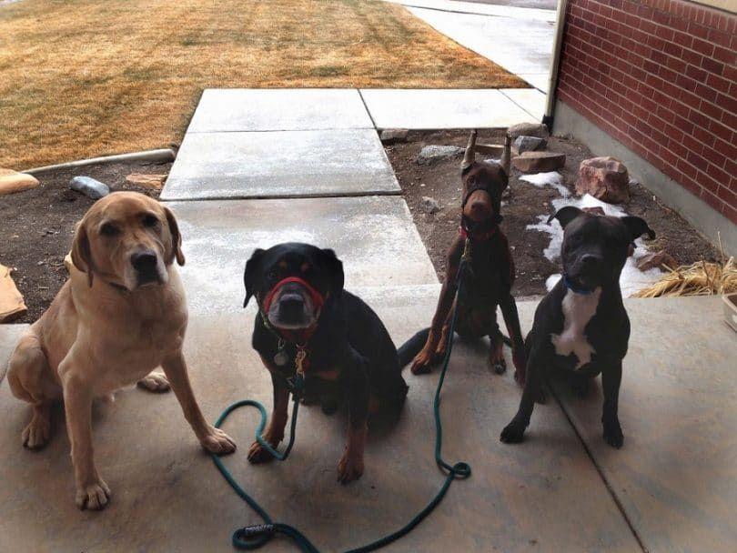 Perros en espera de comando sin correa