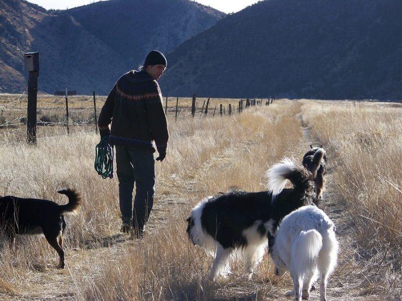 Los perros sin correa