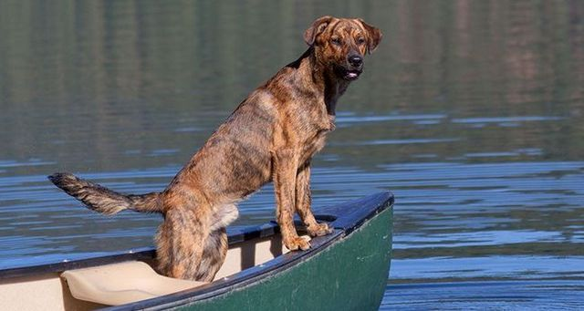Perros oficiales estatales