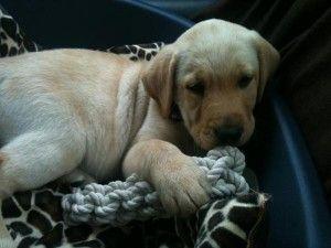 Payne liam uno de dirección compra un perrito!