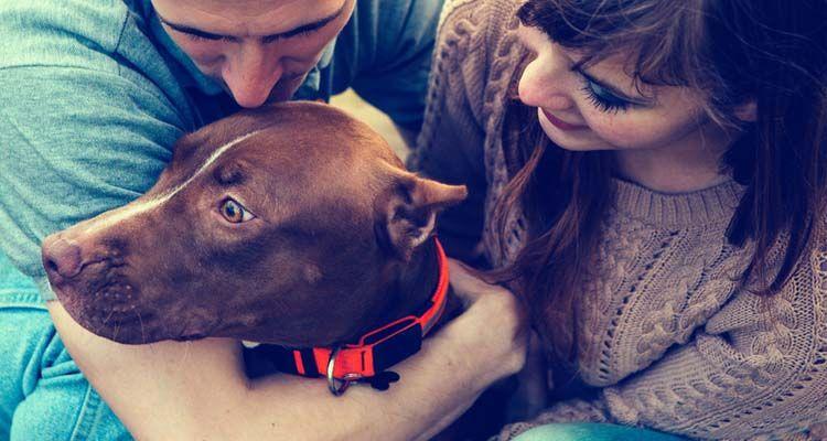 Serendipia y perros