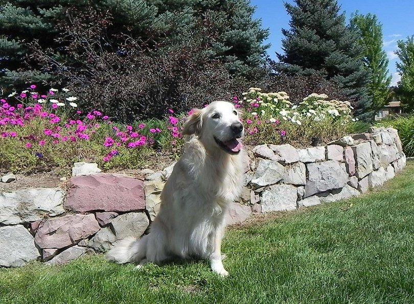 El osteosarcoma en perros: syptoms, causas y posibles soluciones