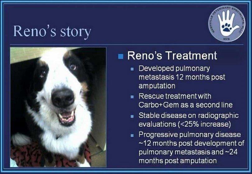 El osteosarcoma canino apendicular