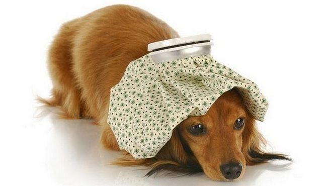 ¡Ay! ¿Qué puedo dar a mi perro para el dolor?