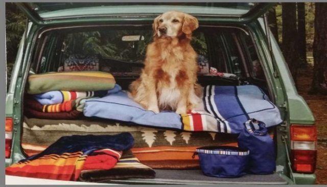 Pendleton celebra Parques Nacional con su colecciГіn ropa de perro