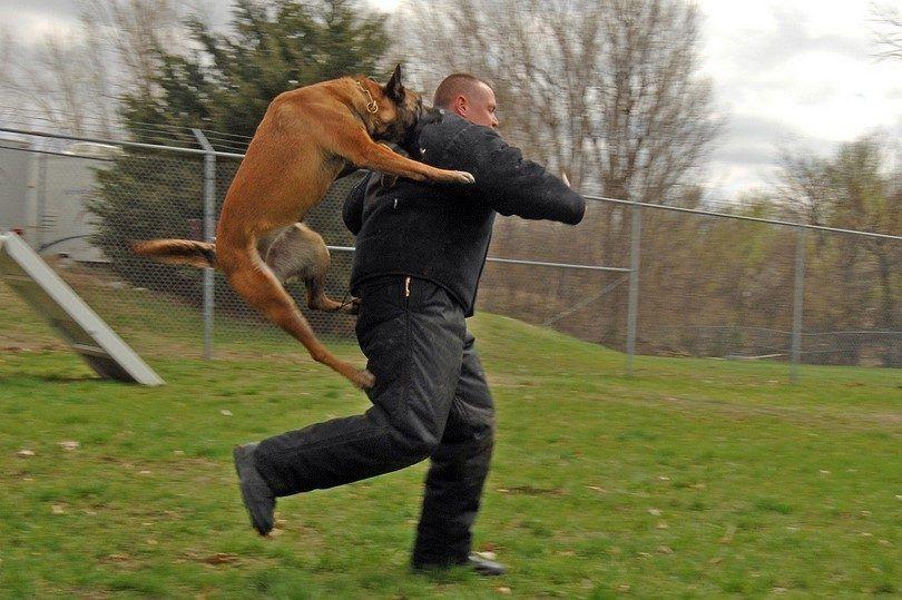 protección personal perro