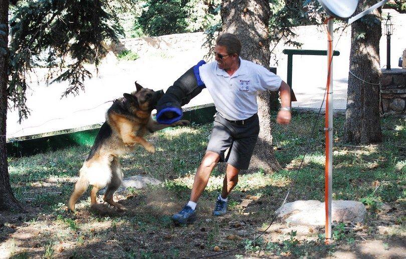 El entrenamiento de su perro