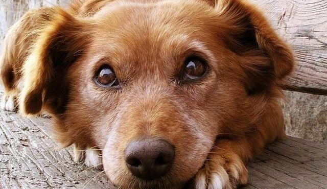 Mascotas preparación para desastres: ¿qué hacer si ocurre un desastre