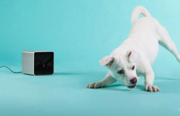 Permite Petcube Dueños de perros interactúan con sus animales domésticos de forma remota