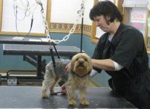 Petplan y total del cuidado de animales se asocian para ofrecer un mejor seguro del animal doméstico para los propietarios