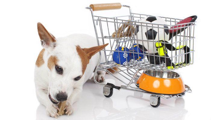 Animales domésticos en un presupuesto - Los mejores lugares para encontrar productos para perros barato