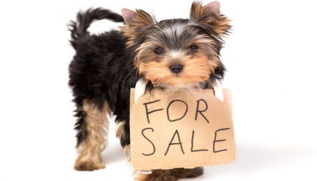Filadelfia dice No a la venta de cachorros en las tiendas de animales, mercados de pulgas