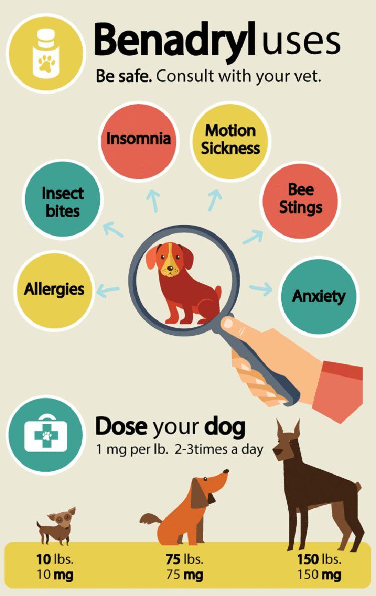Hiedra venenosa en perros: aprender a reconocer los signos y síntomas