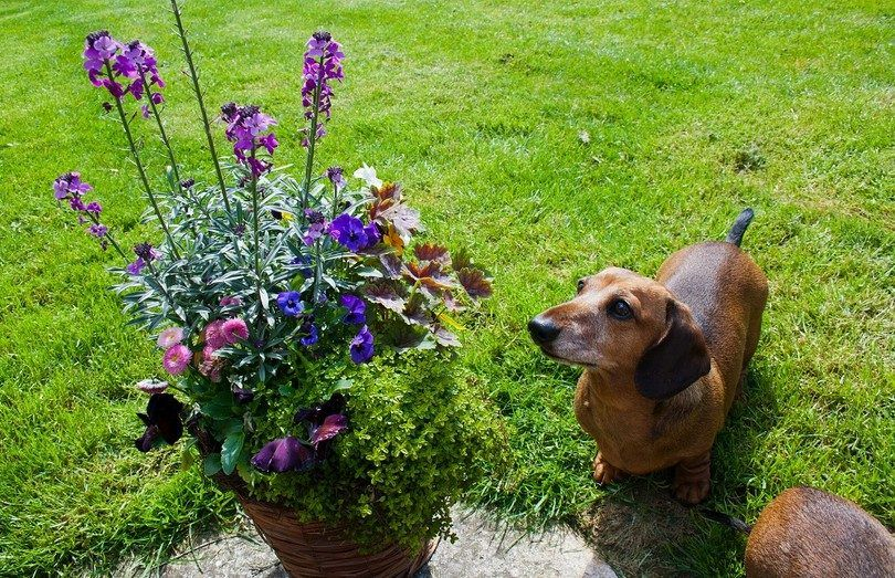 Los perros con la planta