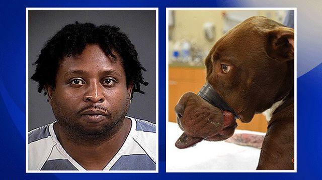 Hombre de detención por la policía acusado de grabar caitlyn del perro boca cerrada