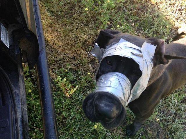 La policía pide ayuda para encontrar dueño del conducto-grabada del perro