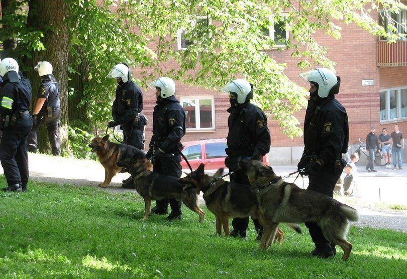perros de la policía
