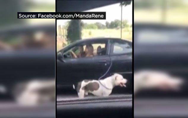 La policГa en busca de la mujer `caminar` perro mientras se conduce un coche