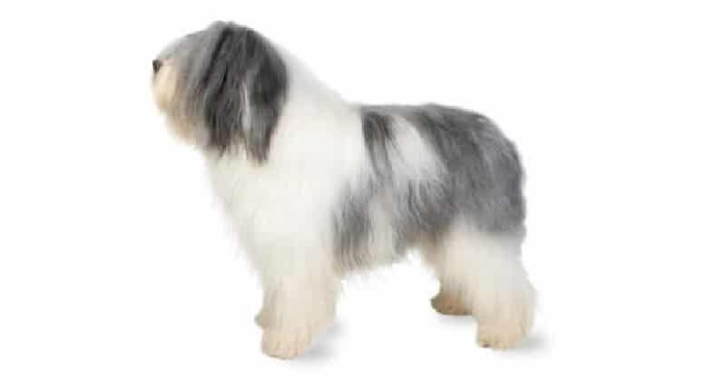 Perro pastor polaco de tierras bajas
