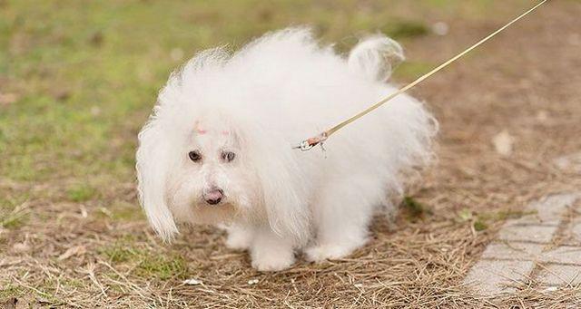Potty que entrena a un cachorro