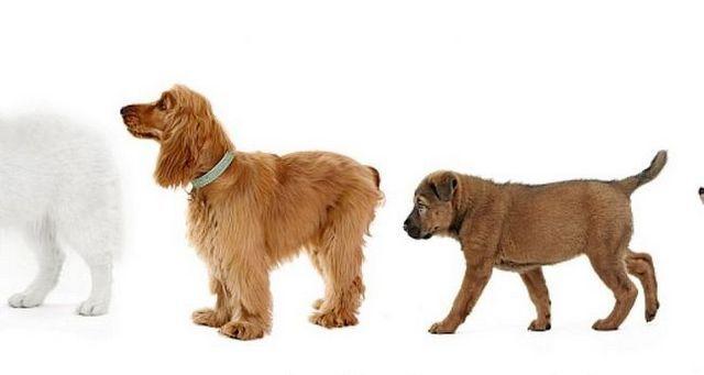 Principio 7 para lograr el equilibrio: paquete de conocer la posiciГіn natural de su perro